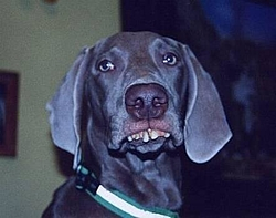 Redneck Photos - A good laugh!-redneck-dog.jpg