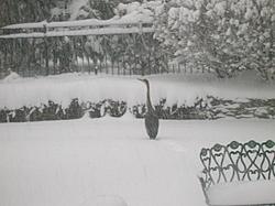 Post Your SNOW Pic's !!!-heron.jpg