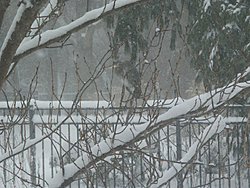 Post Your SNOW Pic's !!!-heron2.jpg