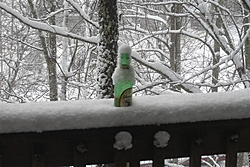 Post Your SNOW Pic's !!!-dsc01871-small-.jpg