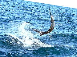 Caught a sail, yeah baby!!-sailfish.jpg