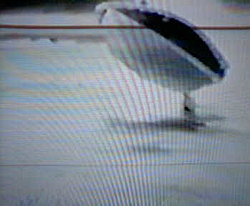 SharkeyMarine-videopic1.jpg