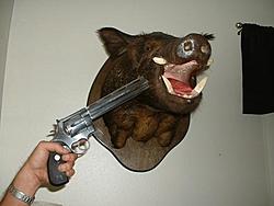 What handguns do you own?-anaconda.jpg