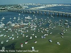 Clearwater Beach Info Needed!!!!-destin-crab-2.jpg