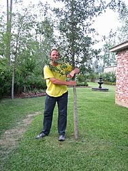 oso tree hugger-img_0624.jpg
