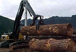 oso tree hugger-330_gilkison-49525.jpg