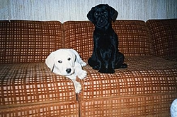 lost my best friend last night-ivan-chelsea0001a.jpg