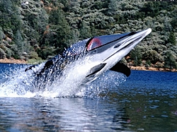 Bionic Dolphin-dolphinpicture-28.jpg