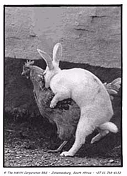 OT: Easter cancelled this year.-eastereggs.jpg