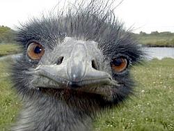 BLee, Are you 30 yet????-birdhead.jpg