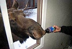 Most entertaining Threads-moosebeer.jpg