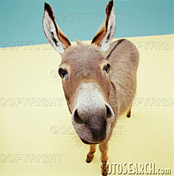 Spoof-donkey.jpg