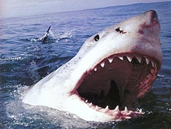 Who let the dogs out???-greatwhite.jpg