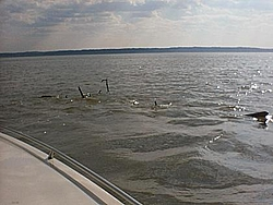 Debris in the Potomac on Saturday-img_0003.jpg