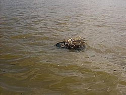 Debris in the Potomac on Saturday-img_0002.jpg