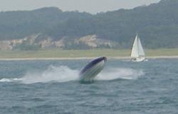 anybody boating on michigan this weekend-zanie-03a.jpg