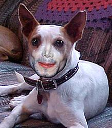 Michael Jackson's Dog-jackson%5Cs-dog.jpg