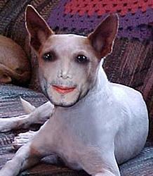 Michael Jackson's Dog-attachment.jpg