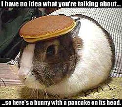 So what do YOU do...?-bunny.jpg