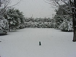 4-8 inches of snow for today!-p3300055-small-.jpg