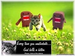 DC vs. TC vs. JC-kittens.jpg