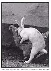 OT:  Where Easter Eggs come from...-eastereggs.jpg