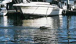RC Boat/Car, who has them?-modelrunning.jpg