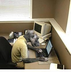 JC PERF or Monkey?????-computer_monkey.jpg