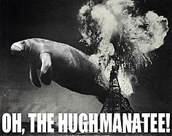 manatee update for today-hughmanatee2bx.jpg