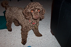 Maggie, Our New Family Member!-maggies-pics-024.jpg