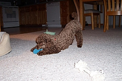 Maggie, Our New Family Member!-maggies-pics-025.jpg