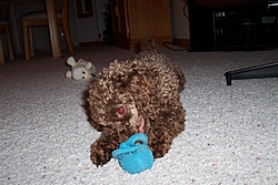 Maggie, Our New Family Member!-maggies-pics-026.jpg