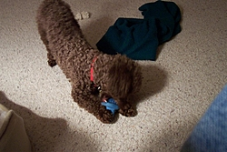 Maggie, Our New Family Member!-maggies-pics-023.jpg