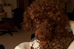 Maggie, Our New Family Member!-maggies-pics-021.jpg