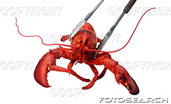 Gonna be in Vegas 6/13 -6/17-lobster.jpg