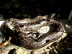 Anyone ever have a run in with a snake on their boat?-bigone-medium-.jpg