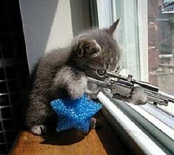 """Fountains """"Cat Killer rumor-cat_killer.jpg"""