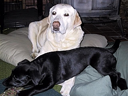 I Had To Say Goodbye To My Best Friend Today-kc-dog-12005-032-small-.jpg