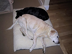 I Had To Say Goodbye To My Best Friend Today-kc-dog-12005-036-small-.jpg