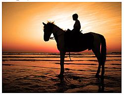 Do you flickr?-horse-sunset.jpg