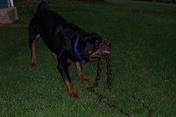 OT-Weird Dog Toys-dcp_0920.jpg