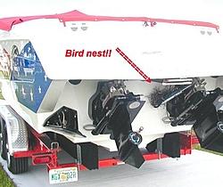 Bird nests in exhaust pipes-p4118578.jpg