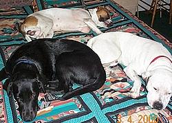 Dog ate hot tub cover!!!-dog2.jpg