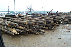Looking for someone around Algonac MI to pull out pillings or cut them off underwater-dock-poles.jpg