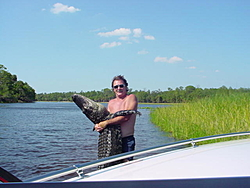 Man, Fl. Alligators are TOUGH!-gator%2520catch%2520upclose.jpg