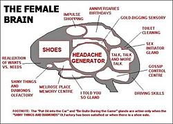 Whats more expensive to maintain boats or women?-femalebrain.jpg