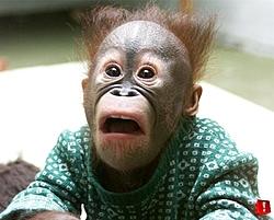 JC PERF or Monkey?????-no-sex-medium-.jpg