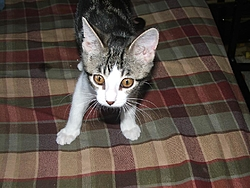 I lost my little friend Lucky today-lucky-020.jpg
