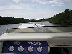 Pics & Movies of the Florida trip with the Tiger-ap2220137.jpg