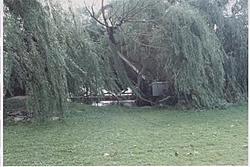 Willow treee 1 Baja 0-boat-vs-tree2.jpg